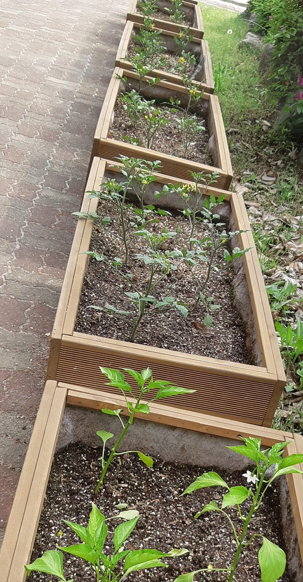 [일반] 재배 및 관찰 식물 의 첨부이미지 1