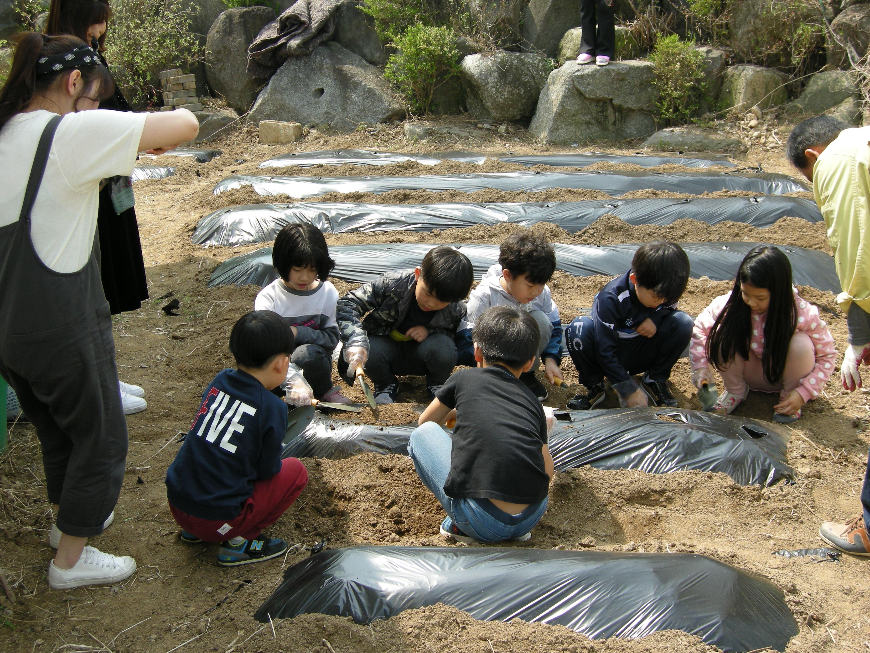 [일반] 생태체험으로 학년별 감자 심던 날(2018.4.20. 어울림교육)의 첨부이미지 2